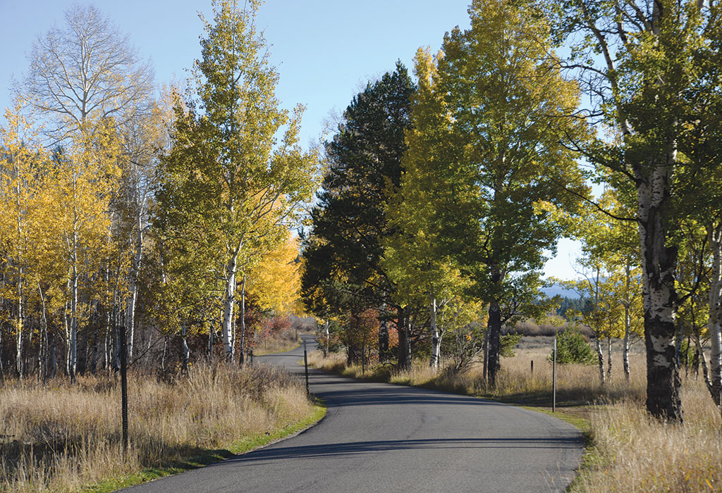 The eight-mile Moose-Wilson Road in GTNP is a favorite spot for moose. Come fall, its aspen trees are among the most colorful in the valley.